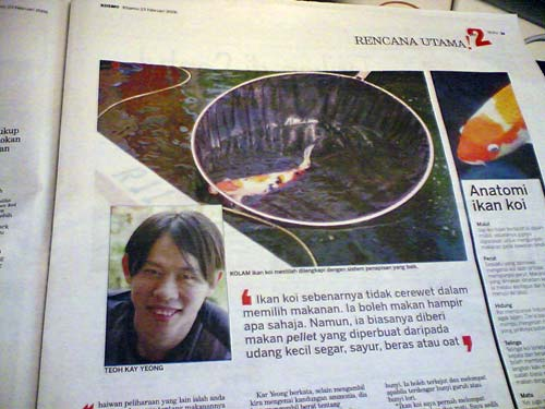 Koi Pond - KY Interviewed by Kosmo Newspaper