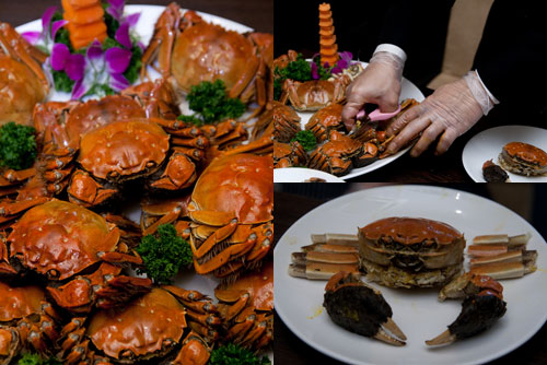hairy crabs (Chinese mitten crabs)