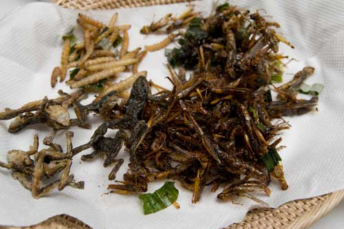 Deep Fried Worms, Insects and Frogs