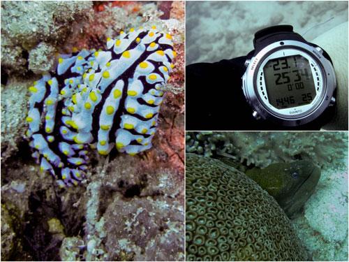 Phyllidia varicosa, dive computer, moray eel