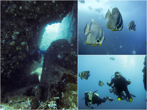 Tokong Laut dive site, Pulau Tenggol