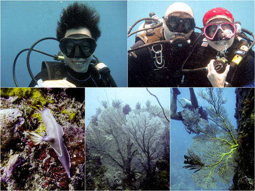 Lost World, Pulau Tenggol, giant sea fan