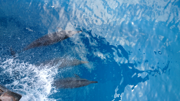 dolphins came by and played a bit in front of our boat