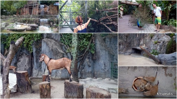 Sunway Lagoon is now also practically a zoo