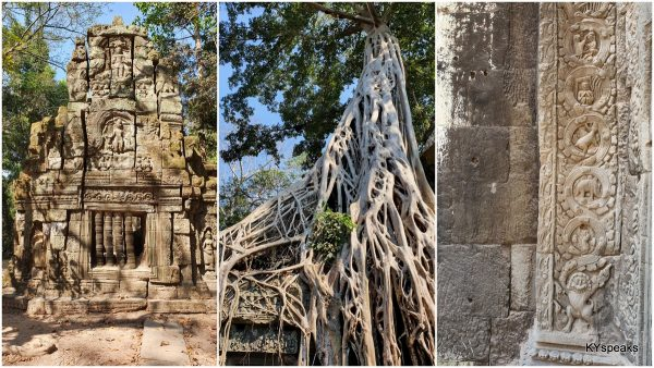 Ta Prohm, with trees growing out of the ruins