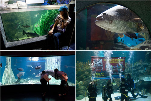 Aquaria KLCC is truly a world class aquarium, right in the middle of the city