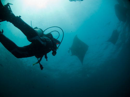 manta ray at Manta Point, Nusa Penida