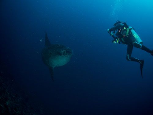 then we meet another mola mola at 37 meter