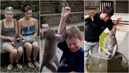 obviously these westerners were braver than me with the monkeys