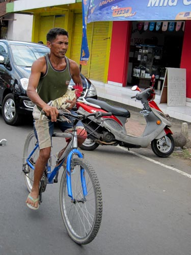 how you transport chicken in Bali