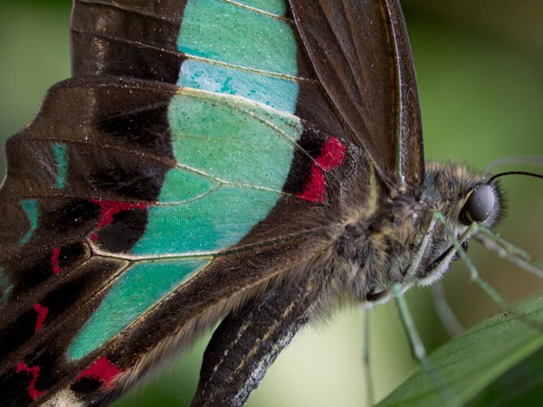 a closer look at the teal colored butterfly