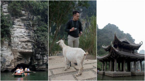 goat on Kong Island