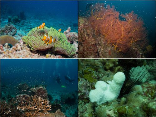 nemo, sea fan, plenty of fish, and this interestingly shaped dead coral.. ermm