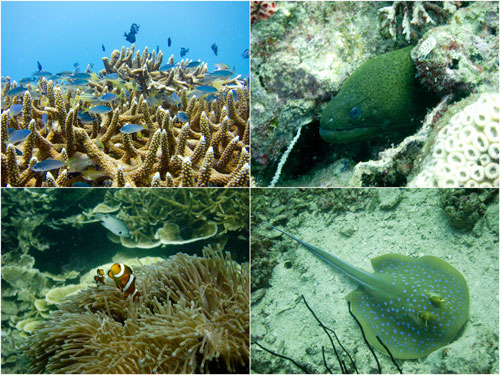 blue fish, more nemo, moray eel