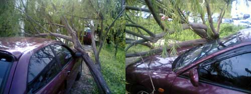 Satria hit by fallen tree