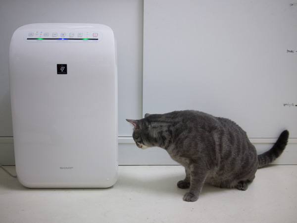 Cendawan checking out the Sharp Air Purifier