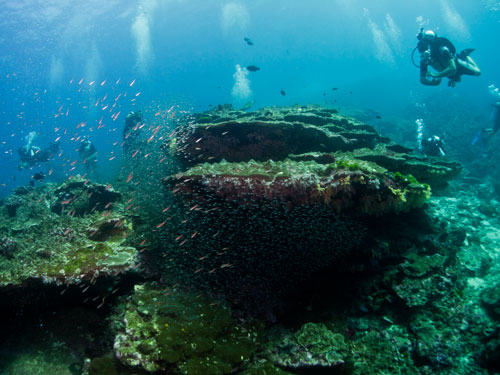 the reef at Koh Bon