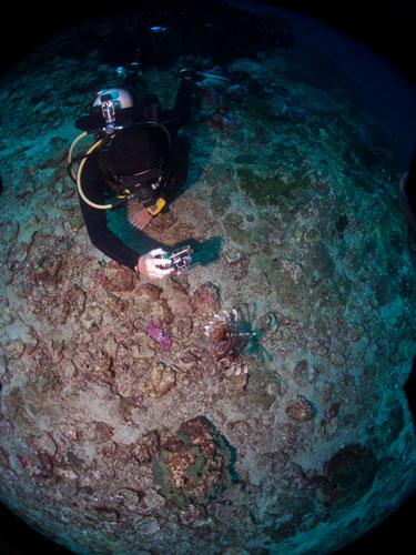 Dave convincing a lion fish to pose for him, Richelieu Rock
