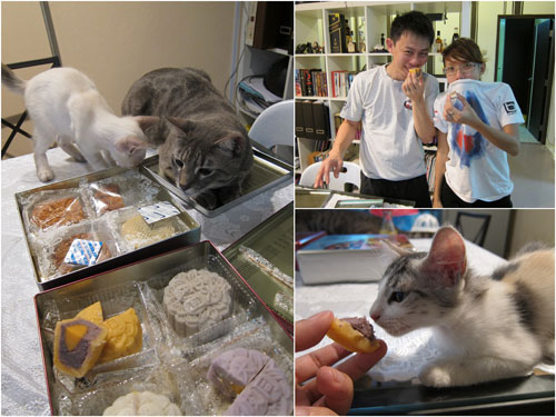it looks like not only the two humans who enjoy Tai Thong mooncakes