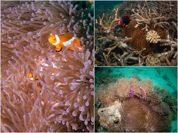 again, there were plenty of nemo, here's three types of them