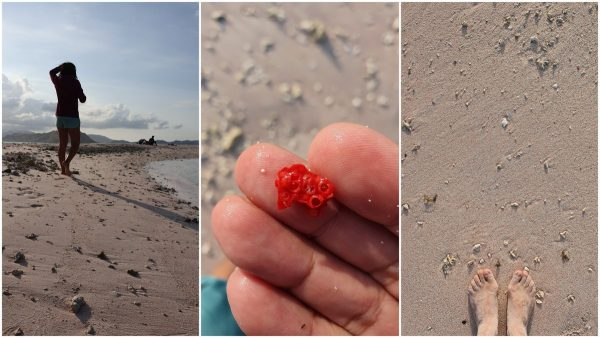 the pink beach is due to all these coral bits (I think)